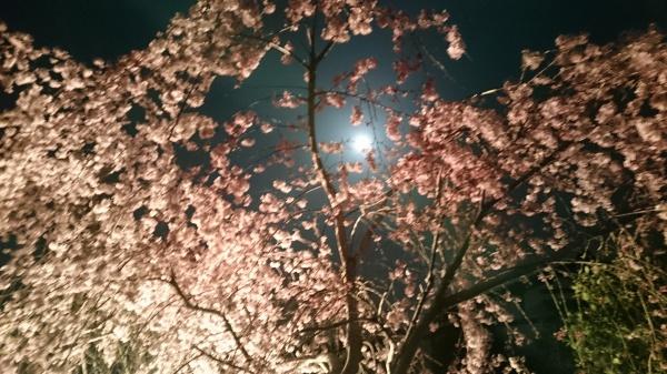 http://www.yutubotei.com/blog/wp-content/uploads/2018/04/51e2543447302145db0f2261e3364d1f.jpg