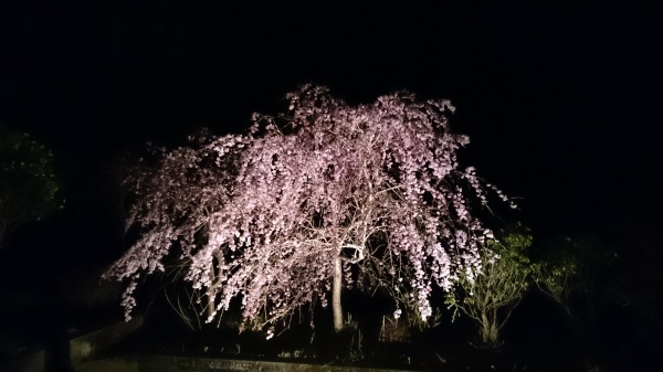 http://www.yutubotei.com/blog/wp-content/uploads/2018/04/d73101f33b81bd06fff963585f8ccbdd.jpg